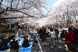 Sakura, Moment Indah yang bisa dirasakan setahun sekali